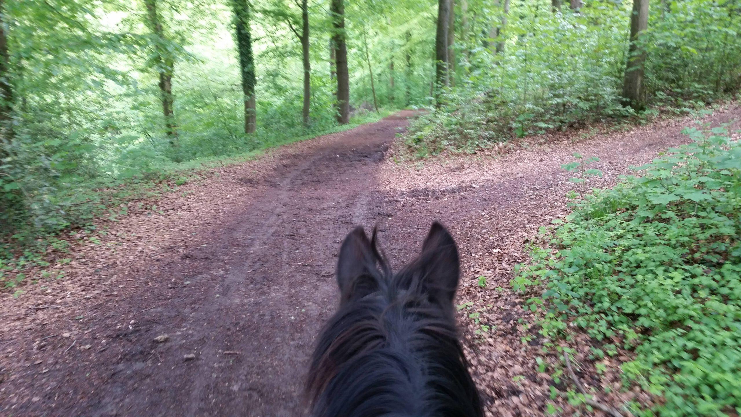Ausreiten im Wald